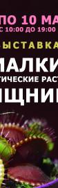 Фиалки и Экзотические растения Хищники в Одессе к 8 марта